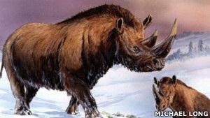 На Колыме вскрыли причины гибели шерстистых носорогов