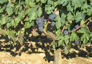 Дело: В Украине резко подорожает вино