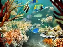 В Атлантическом океане обнаружен источник жизни на Земле