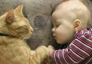 Крымские медики утверждают, что кот не виноват в смерти младенца