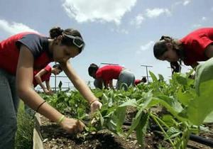 Кубинские власти отказались от добровольного труда школьников в сельском хозяйстве