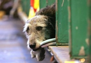 Киевлянам советуют защищаться от бездомных собак с помощью дезодоранта