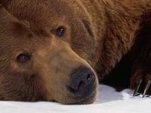 В Донецкой области медведь убил проникшую в вольер нетрезвую женщину