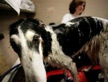 Первые в мире клонированные собаки привели потомство