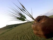 ВБ требует отменить квоты на экспорт украинского зерна