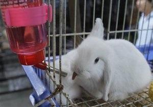 Жителя Челябинска накажут за убийство кролика