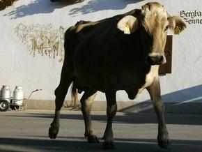 Испанка умерла от коровьего бешенства