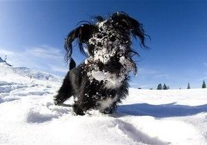В США пес чудом выжил, проведя четыре дня под снежным завалом