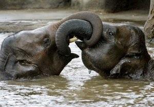 В Индии два слона устроили погром на местном рынке, один человек погиб