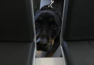 В Москве бешеная собака покусала более 40 человек