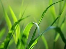 В Японии будут создавать биотопливо из травы