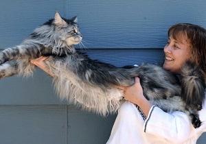 В штате Невада живет самый длинный в мире кот