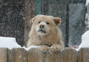 Прогноз погоды: В Карпатах снег и -10 градусов