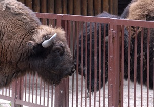 Столичные чиновники отказались опекать животных из зоопарка