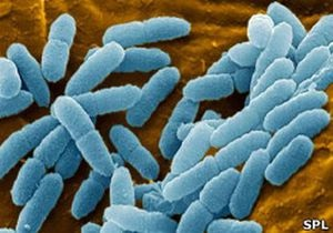 Ученые: эпоха антибиотиков подходит к концу