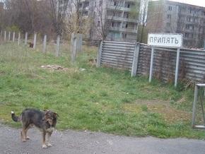 В Чернобыльской зоне бешеный волк напал на шестерых работников ЧАЭС