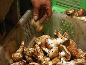За полмесяца в Днепропетровской области от употребления грибов умерло 14 человек