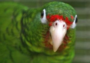 Мама, приди. В Германии полиция приехала спасать оставленного в пустой квартире попугая