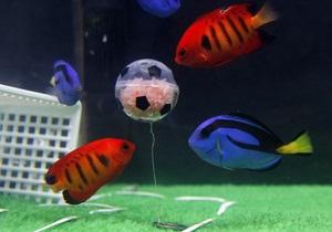 В Японии состоялся футбольный матч между аквариумными рыбками