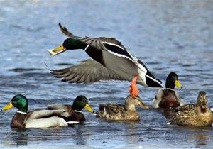 Кабмин перенес открытие сезона охоты из-за жары