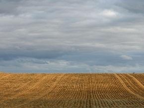 С глобальным потеплением будут бороться с помощью зерновых