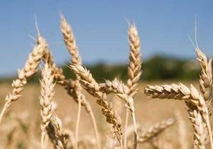 Украина в 2011 году занимает 16,7% мирового рынка по экспорту ячменя