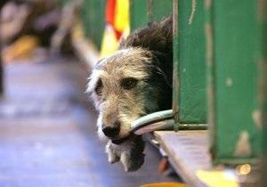 В интернете появился видеоролик о верности собак во время трагедии в Японии