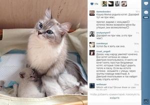 Россия - Медведев сообщил в Instagram, что кошка Милка родила котят
