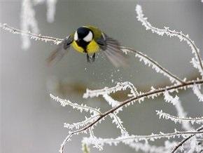 Погода на завтра: на Закарпатье объявлено штормовое предупреждение