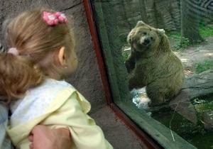 Киевский зоопарк планирует потратить на реконструкцию 5,3 млн гривен