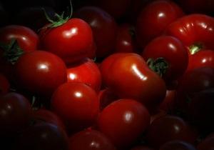 Индийские ученые вывели помидоры, которые сохраняют товарный вид 45 дней