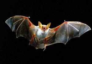 Лос-Анджелесу угрожают бешеные летучие мыши