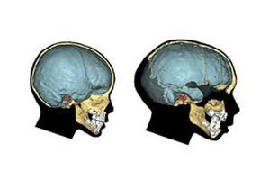 Новости науки - британские ученые: Британские ученые объяснили, почему вымерли неандертальцы