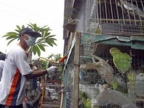 H5N1 убил вьетнамку