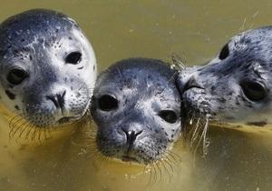 На побережье в Казахстане обнаружили 48 мертвых тюленей