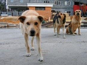 В Донецке бродячие собаки искусали семилетнюю девочку