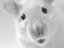 Наступает Год земляной крысы по восточному календарю