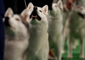 Канадцу предъявили обвинения в убийстве 56 собак