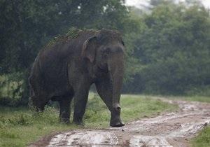 В Индонезии стадо слонов оккупировало деревню