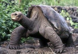 Скончалась последняя гигантская галапагосская черепаха