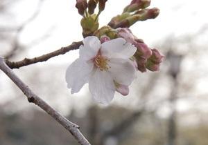 В Японии убийца пяти человек оставил в своем окне хокку
