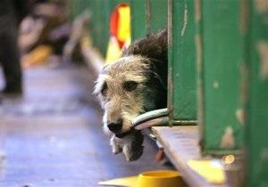 Киевские власти разрабатывают новую концепцию обращения с бездомными животными