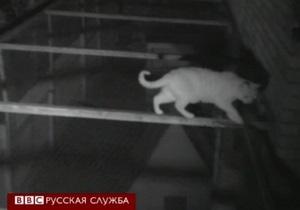 Британские ученые выяснили, что коты делают по ночам