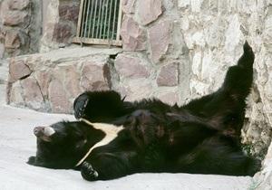 В Киевском зоопарке родился уссурийский белогрудый медвежонок