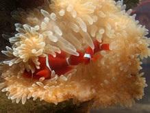 Карибское море лишилось 80% кораллового покрытия