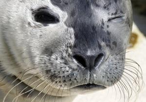 Ученые выделили у тюленей опасный для людей штамм гриппа