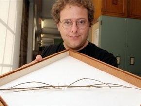 На острове Борнео нашли самое длинное насекомое