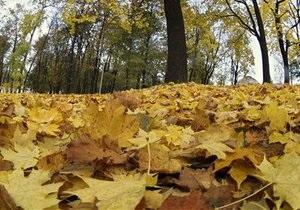 Из Киева вывезли три тысячи тонн листьев