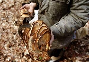 В Винницкой области целая семья попала в больницу после употребления грибов