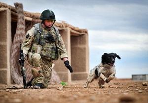 В Лондоне посмертно наградили спаниеля, погибшего с британским солдатом в Афганистане